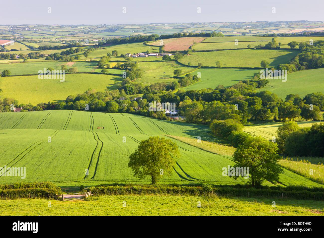 Hügeligem Ackerland in der Nähe von Stockleigh Pomeroy, Devon, England. Sommer (Juni) 2009 Stockbild