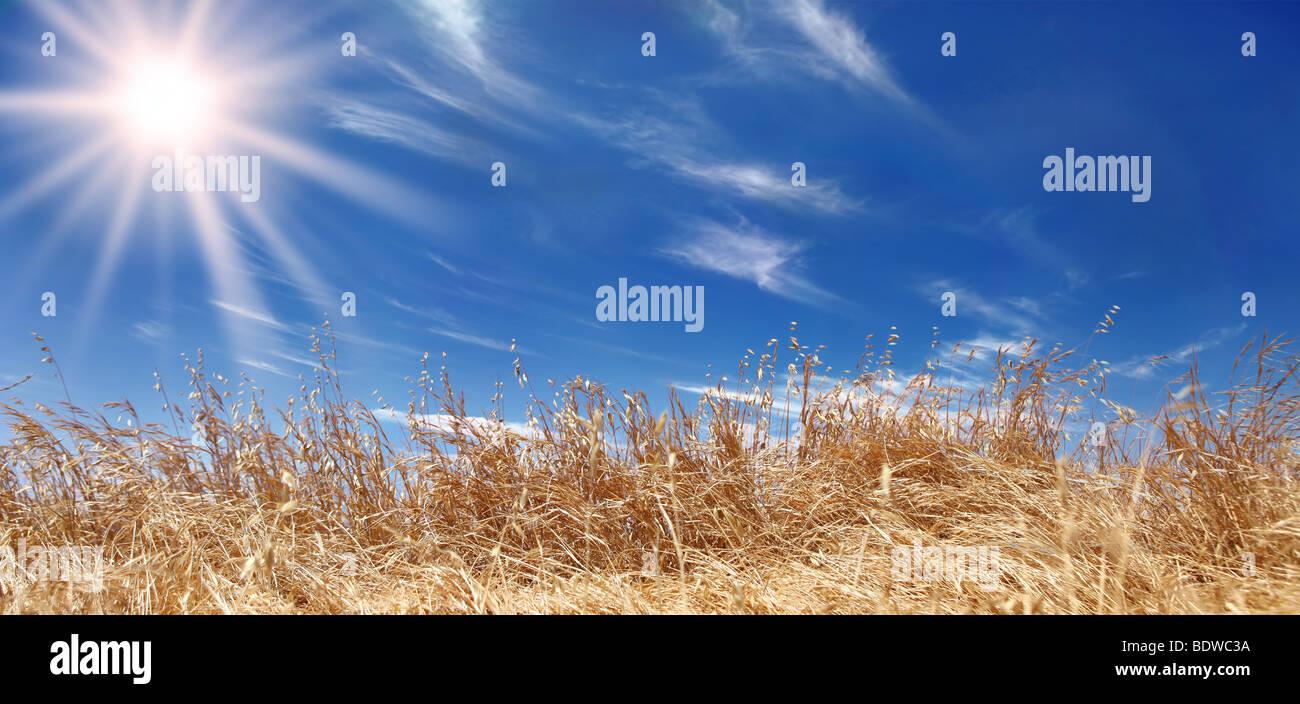 Weizen Feld Panorama mit einem wunderschönen Himmel Stockbild