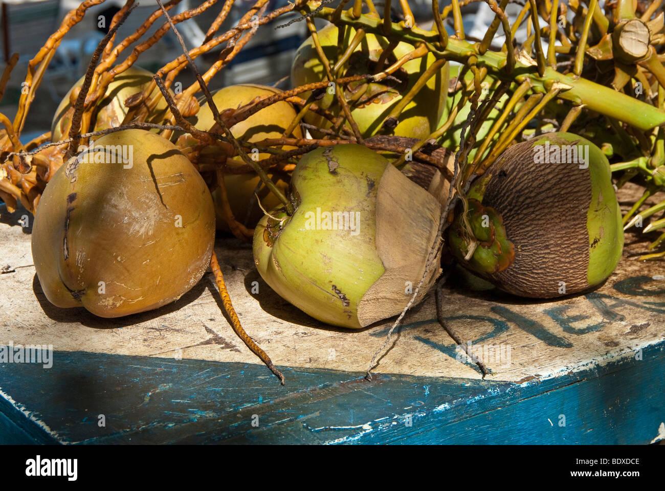 Kokosnüsse für Verkauf auf einem Tisch am Strand auf der karibischen Insel Tortola angezeigt. British Stockbild