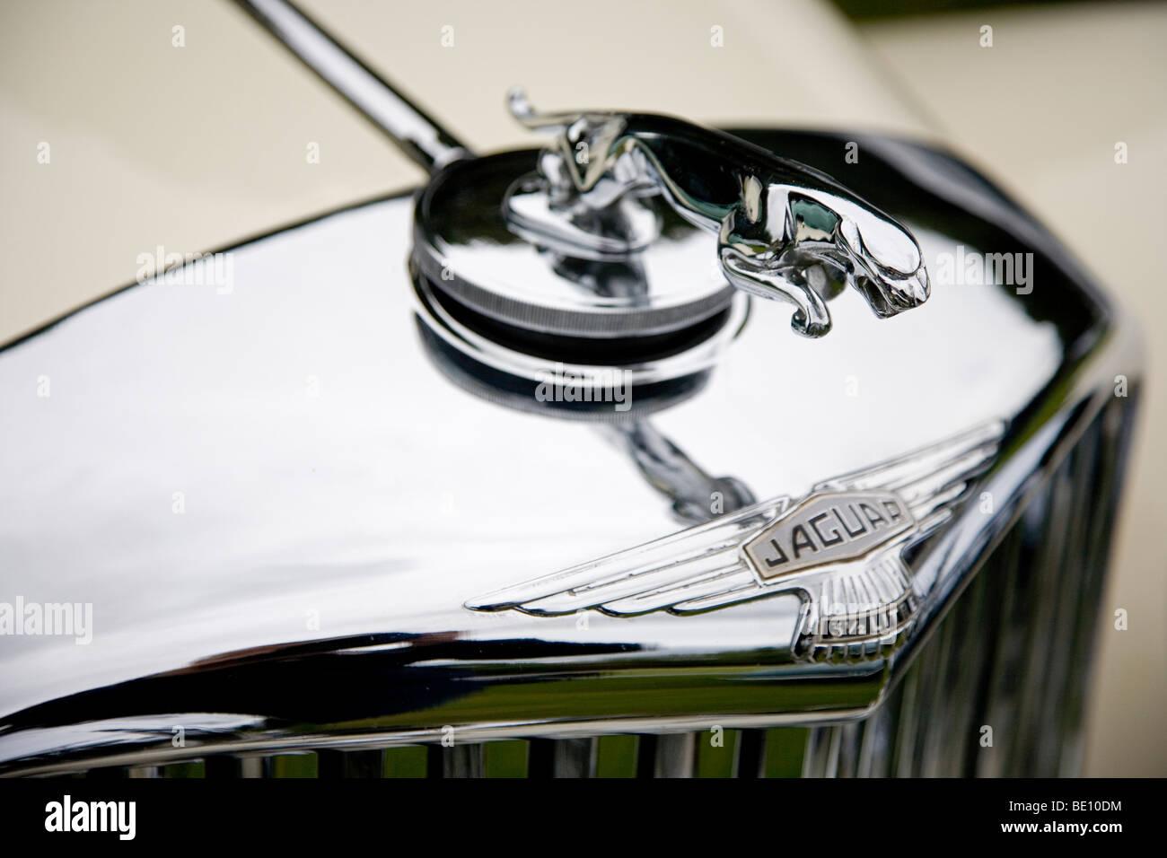 Silber springt Jaguar Ornament Emblem auf einem Jaguar Oldtimer bei der jährlichen Wilton Park Classic Car Stockbild