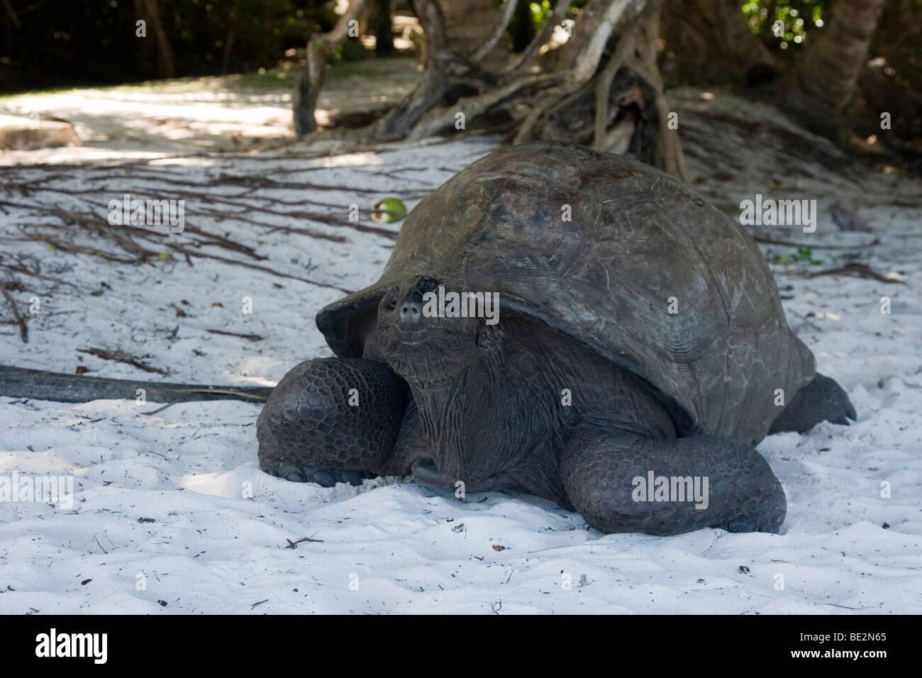 Reise in den Seychellen Insel ' 09 Stockbild