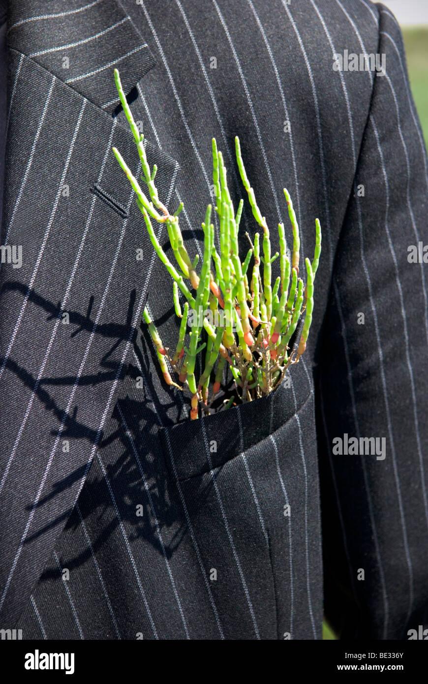 Nahaufnahme der grünen Pflanze einen Nadelstreifenanzug aus eigener Tasche aufkleben Stockbild