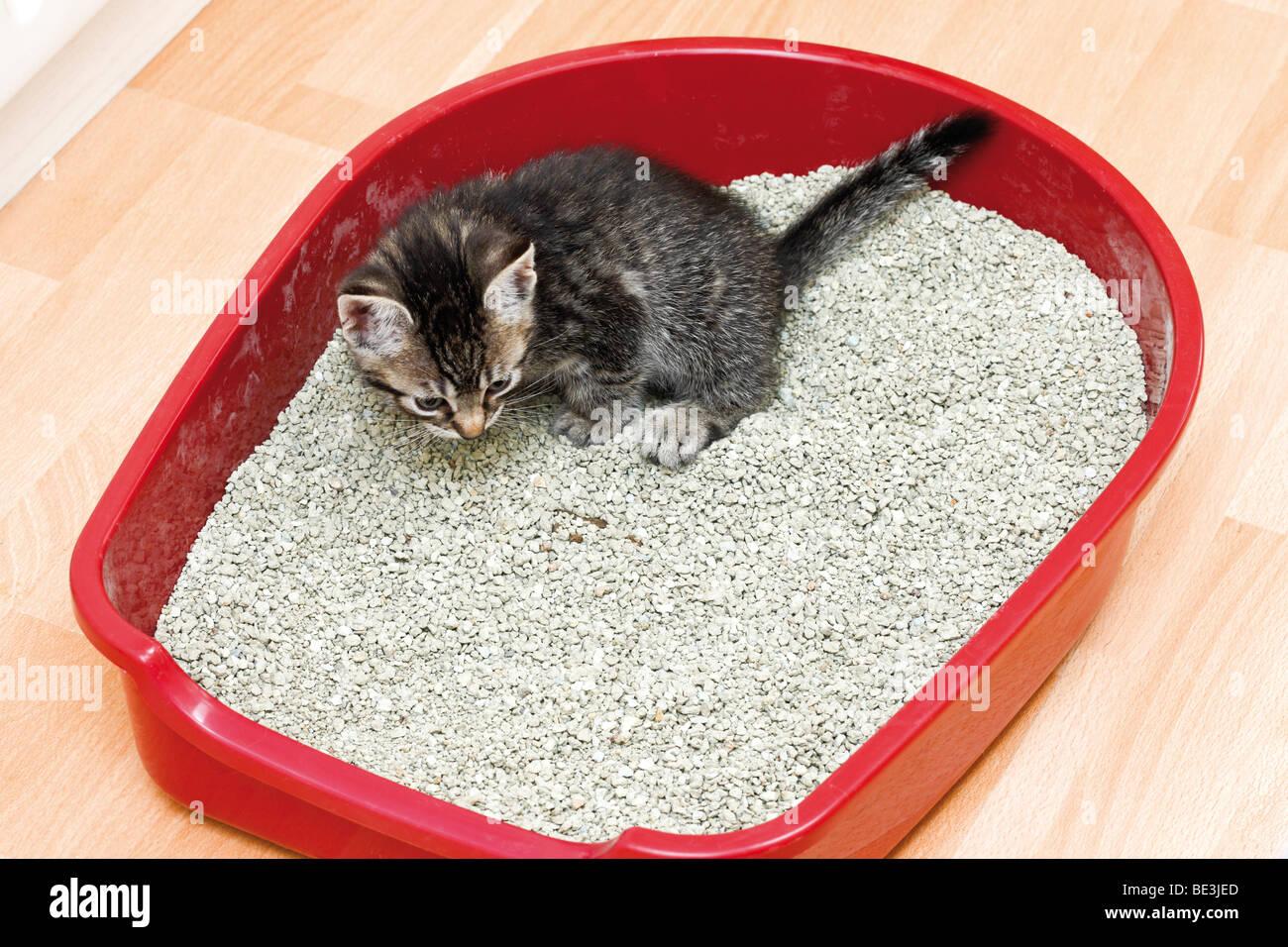 Litter Box For Cat Stockfotos & Litter Box For Cat Bilder - Alamy