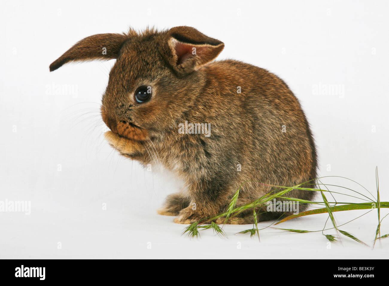 Junge streicheln Kaninchen Reinigung selbst Stockbild