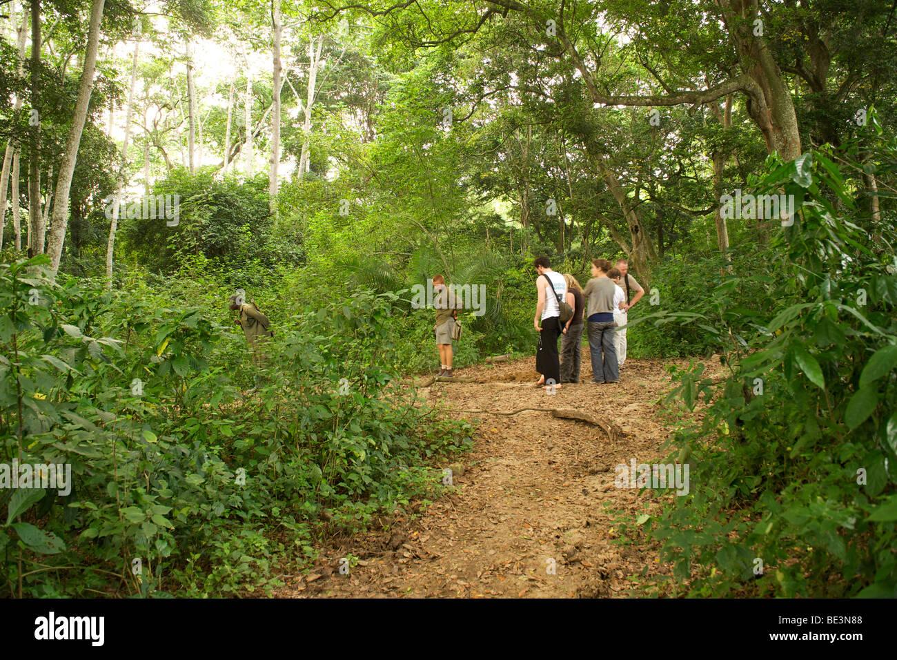 Touristen, tracking, Schimpansen in Kyambura River Gorge in Queen Elizabeth National Park im Westen Ugandas. Stockbild