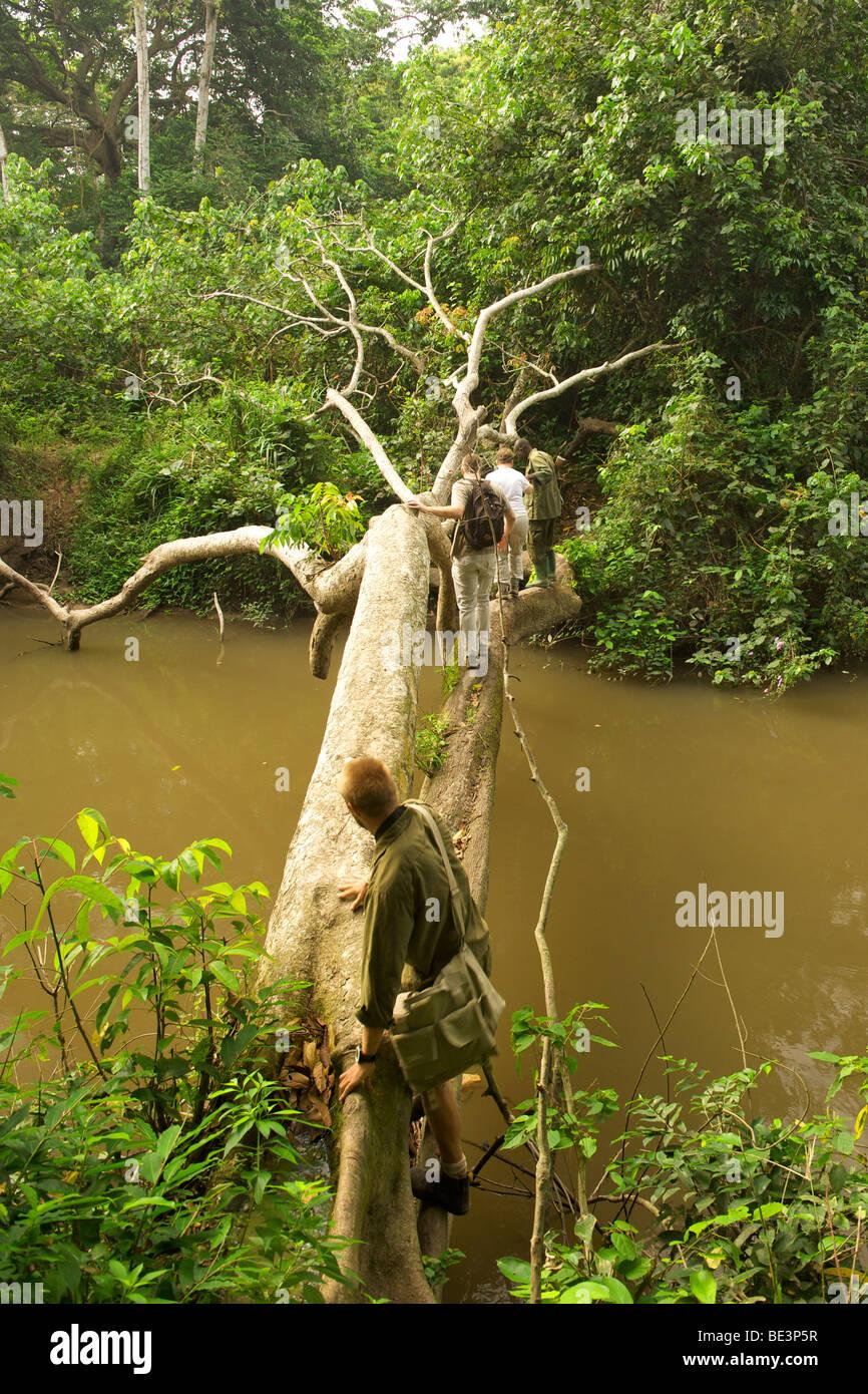 Touristen, die Schimpansen tracking überqueren Sie den Fluss der Kyambura im Kyambura River Gorge in Queen Stockbild