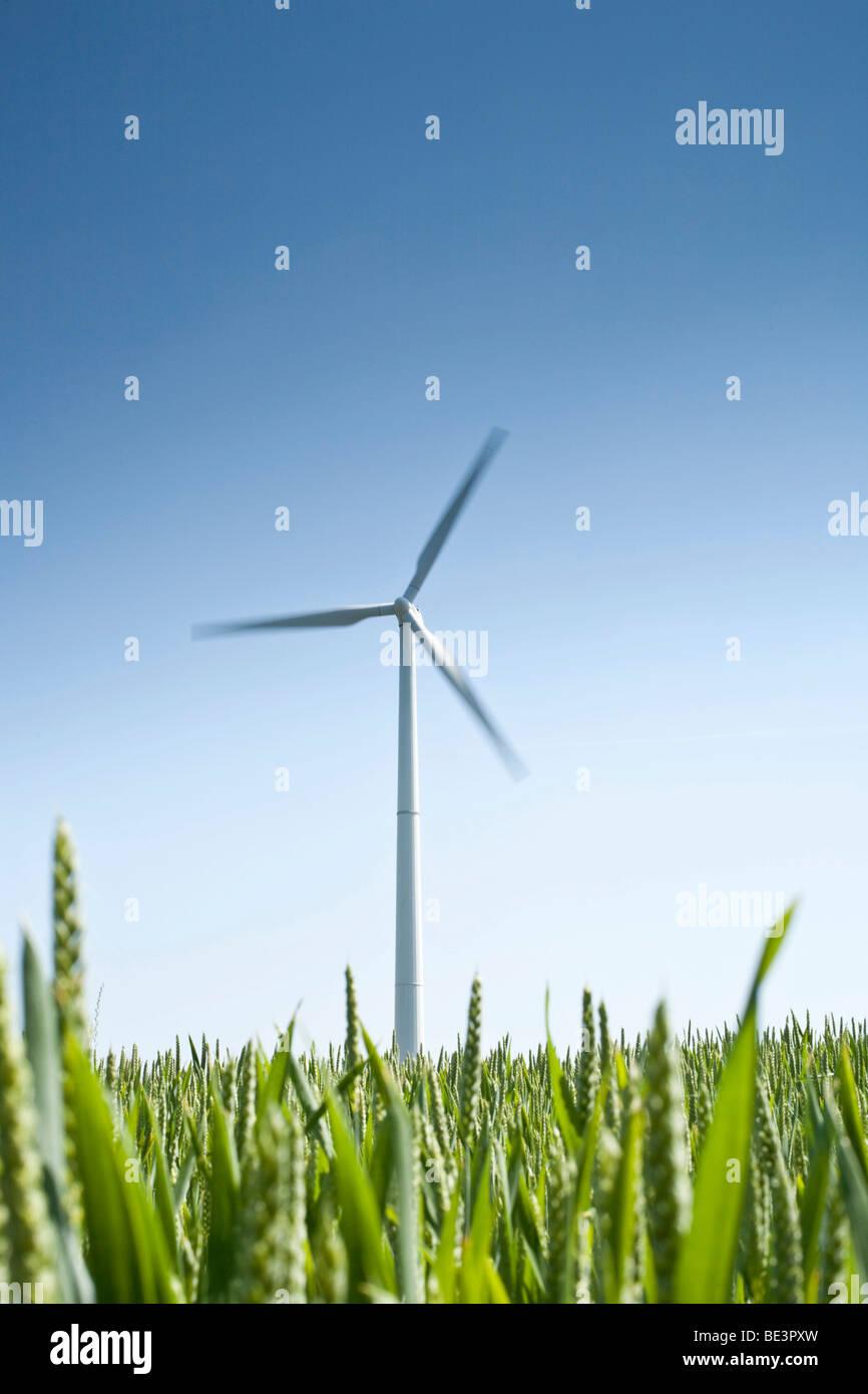 Windkraftanlage vor blauem Himmel, Feld im Vordergrund Stockbild