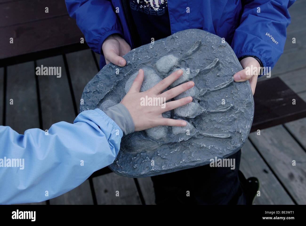 Junges Mädchen, 10-11, legt ihre Hand auf eine Besetzung von ein Braunbär Ursus Arctos, Paw print, Alaska. Stockbild