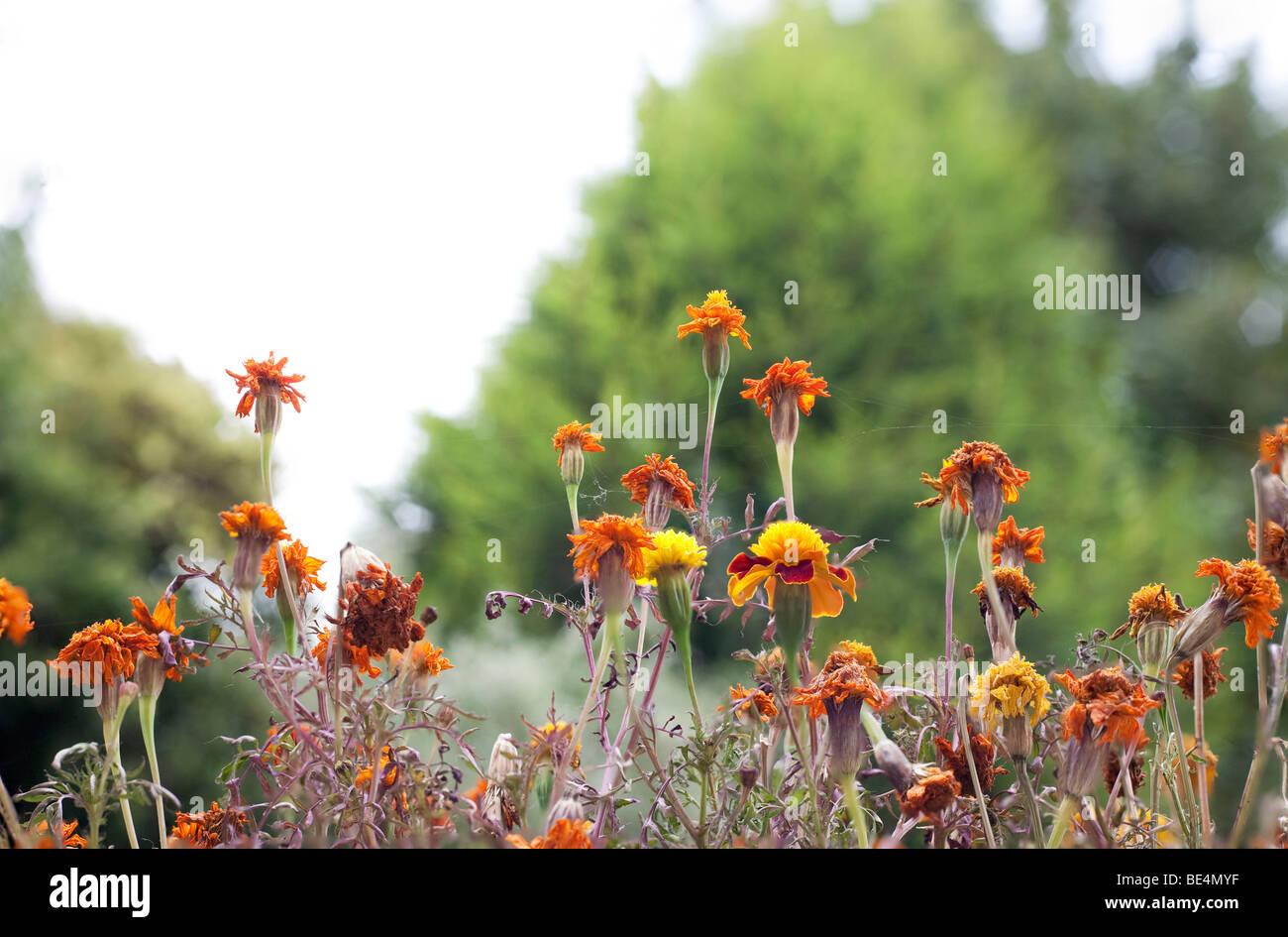 Nett Sterbende Blumen Mit Lebensmittelfarbe Fotos - Malvorlagen ...