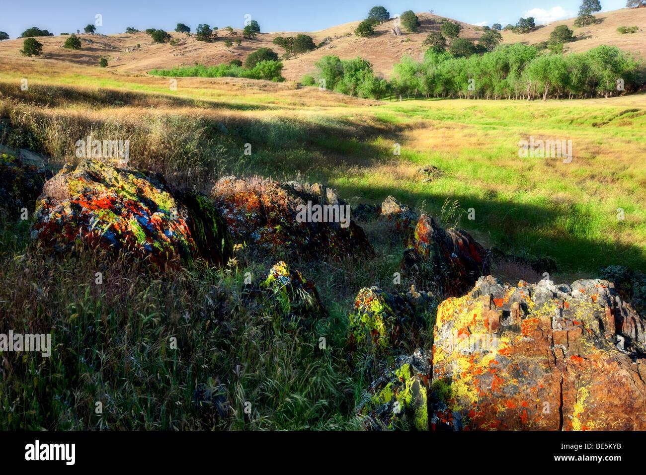 Bunten Flechten und sanften Hügeln. Merced Flechten Felder, Kalifornien Stockbild