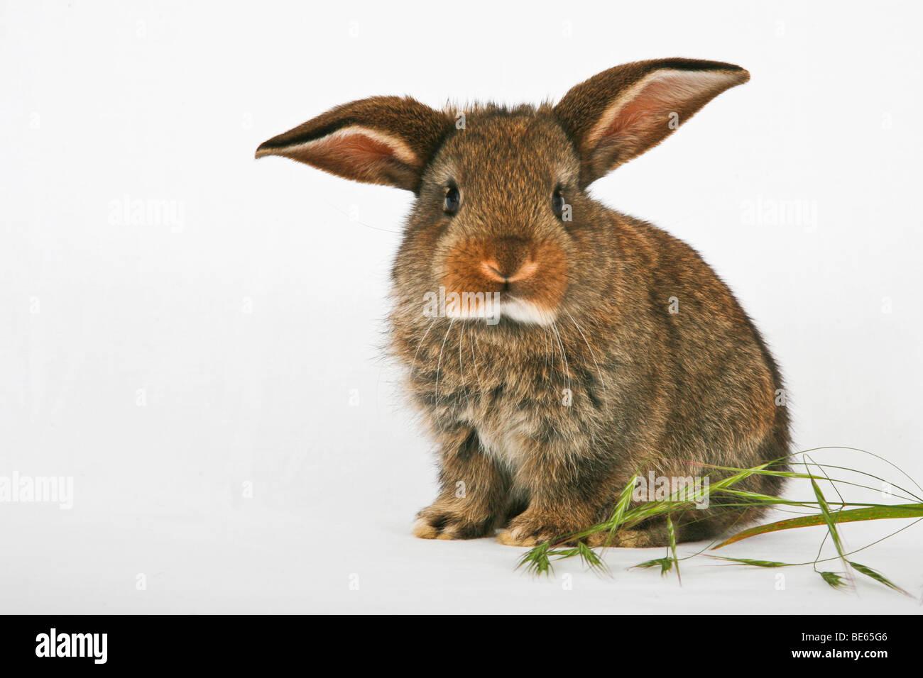 Junge streicheln Kaninchen Stockbild