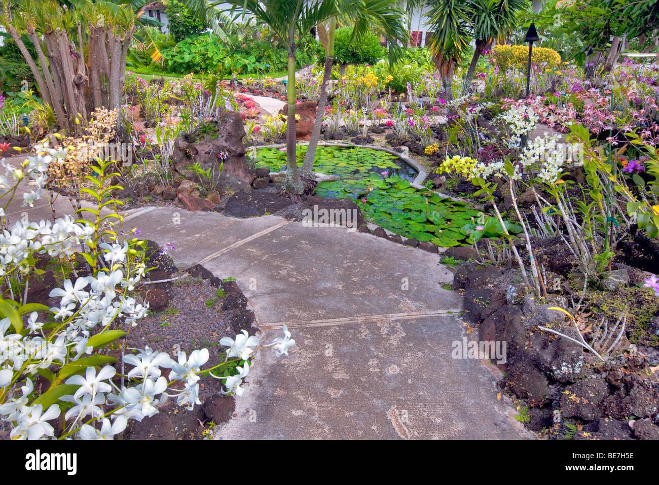 Orchideen und Pfad bei Moir Gardens. Klahuna Plantation Resort. Kauai, Hawaii Stockbild