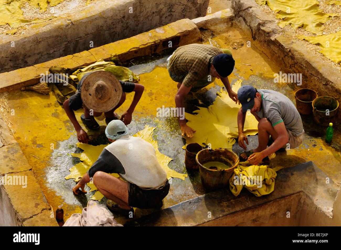 Marokko; Fes; ChouwaraTannery; Arbeitnehmer Anwendung gelben Farbstoff verbirgt Stockbild