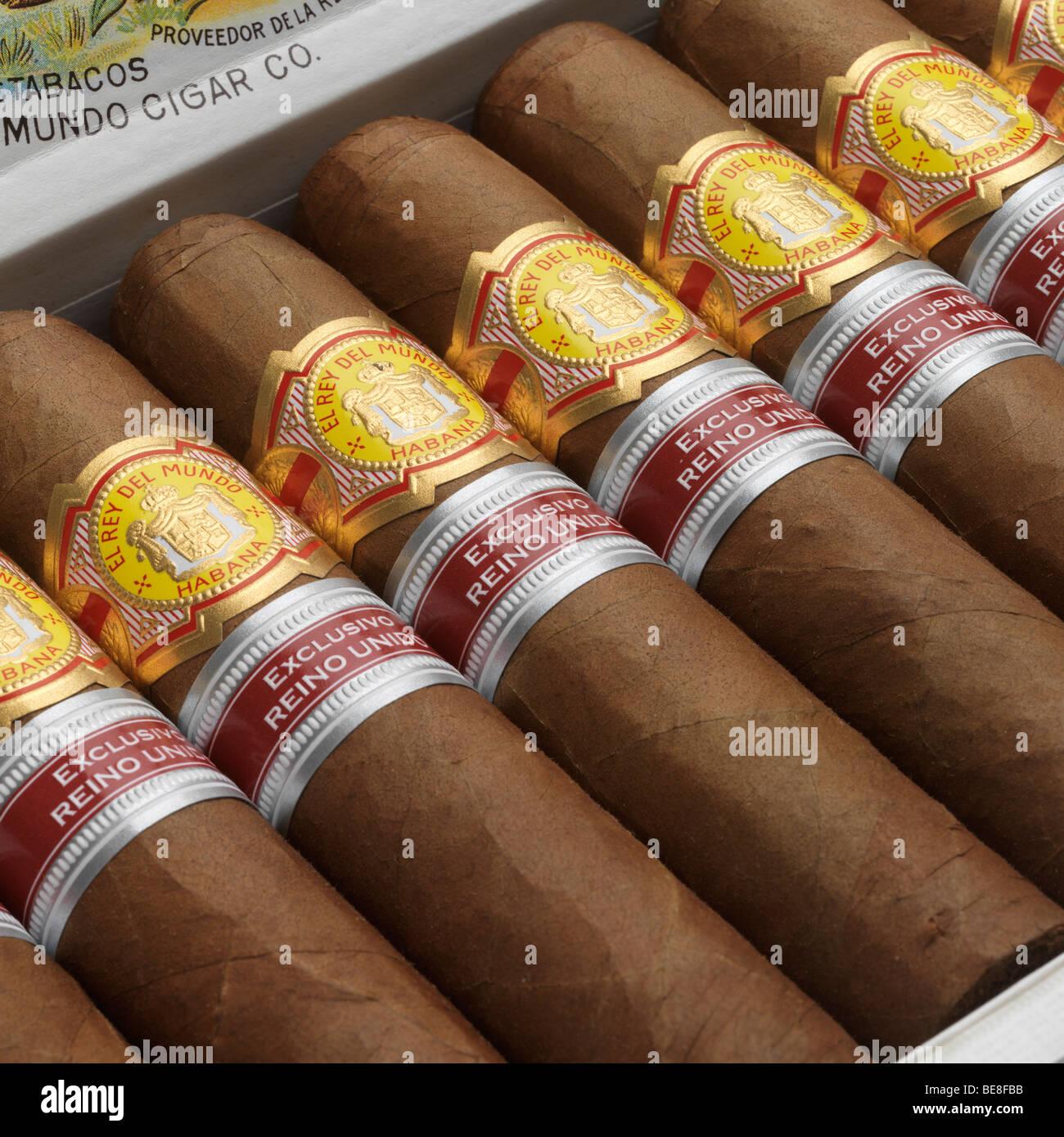 Eine Schachtel mit Havanna-Zigarren. Stockbild
