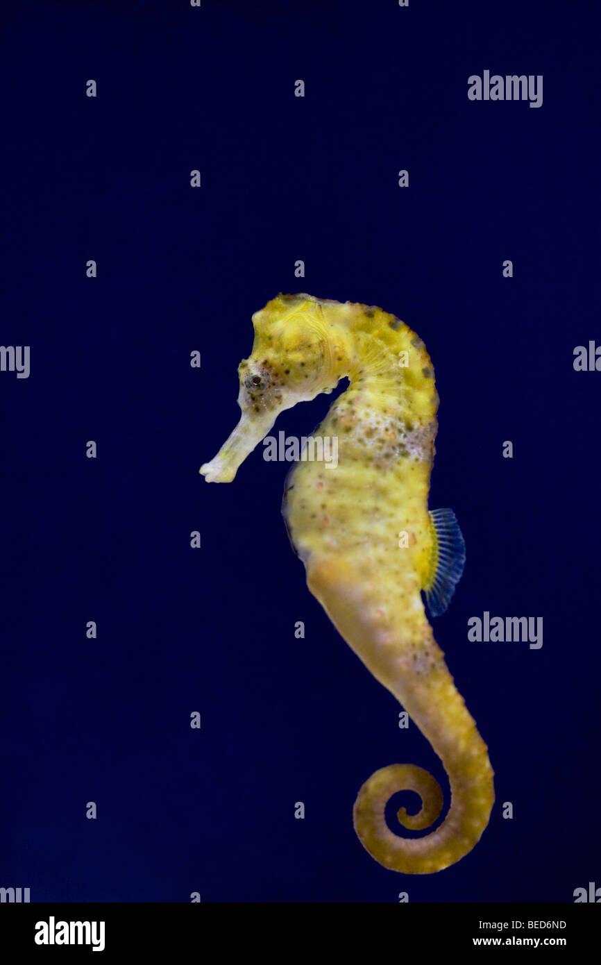 Horse Swimming Underwater Stockfotos & Horse Swimming Underwater ...