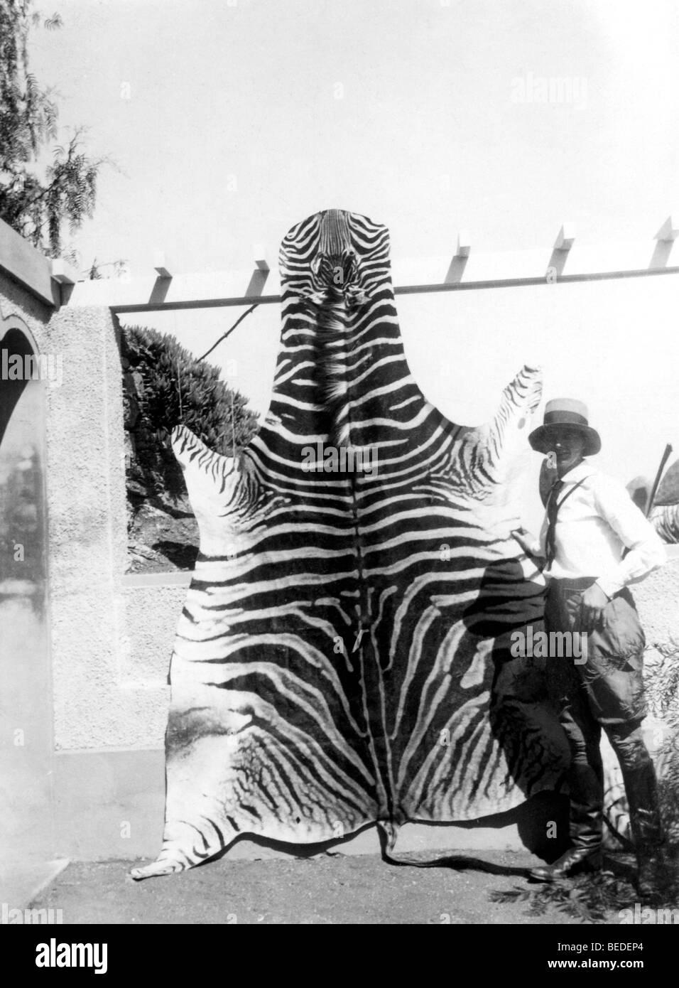 Historisches Foto, Frau mit einem Tiger verstecken, um 1923 Stockbild