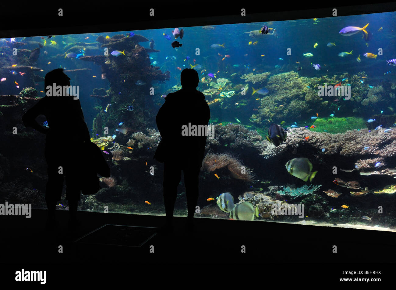 fishes stockfotos fishes bilder alamy. Black Bedroom Furniture Sets. Home Design Ideas