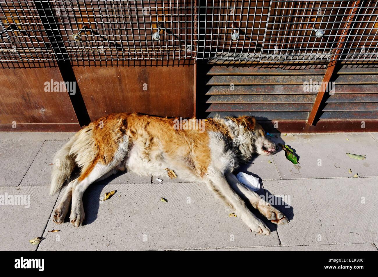 Streunenden Sie Hund schlafen unter Wurf in einer Stadtstraße Stockbild