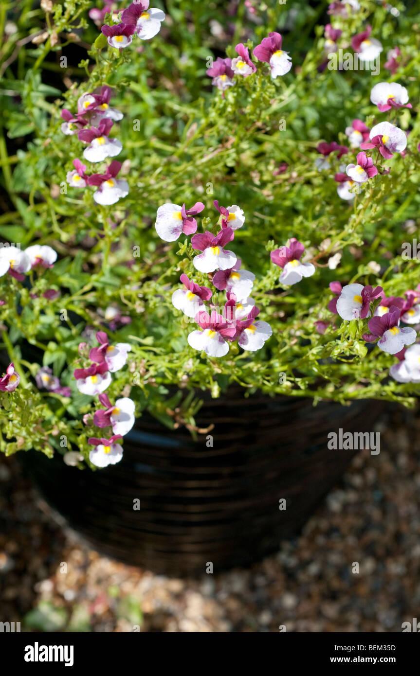 Blumen in einem Behälter Stockfoto