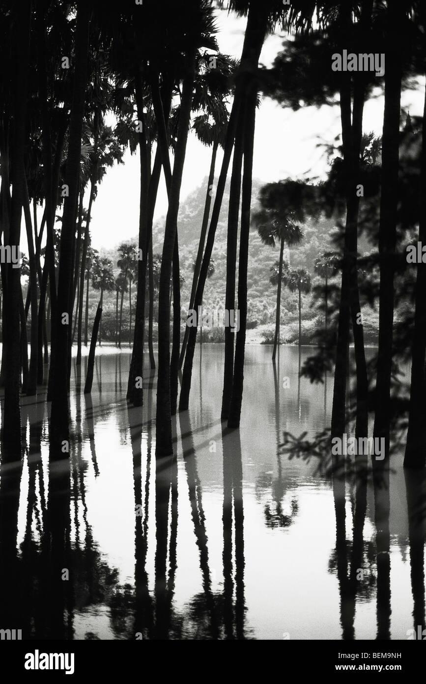 Myanmar (Burma), Palmen in Wasserlandschaft Stockbild