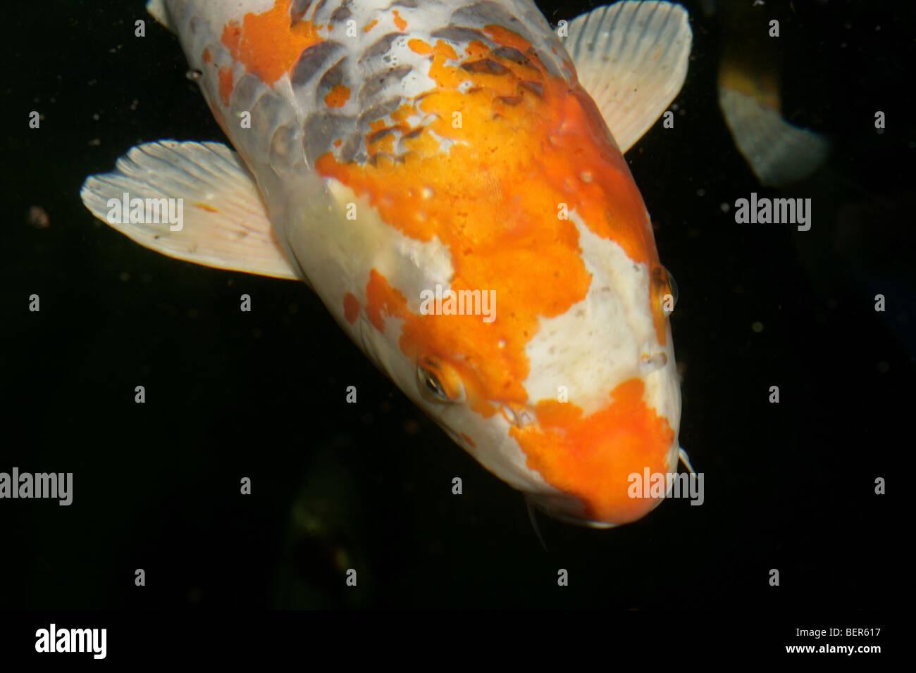 Kleine Fische große Teich datieren
