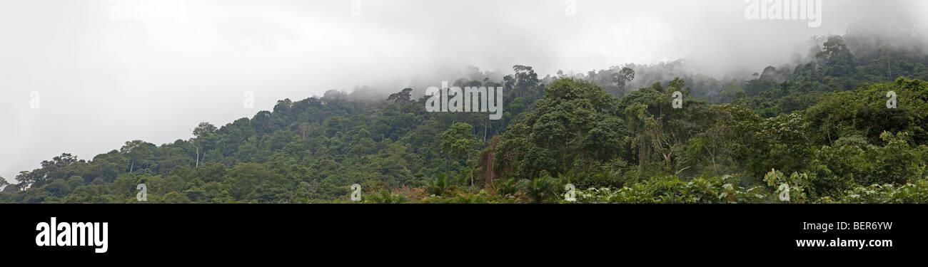 Nebligen Regenwald Dschungel Ansicht, Malaysia Stockbild