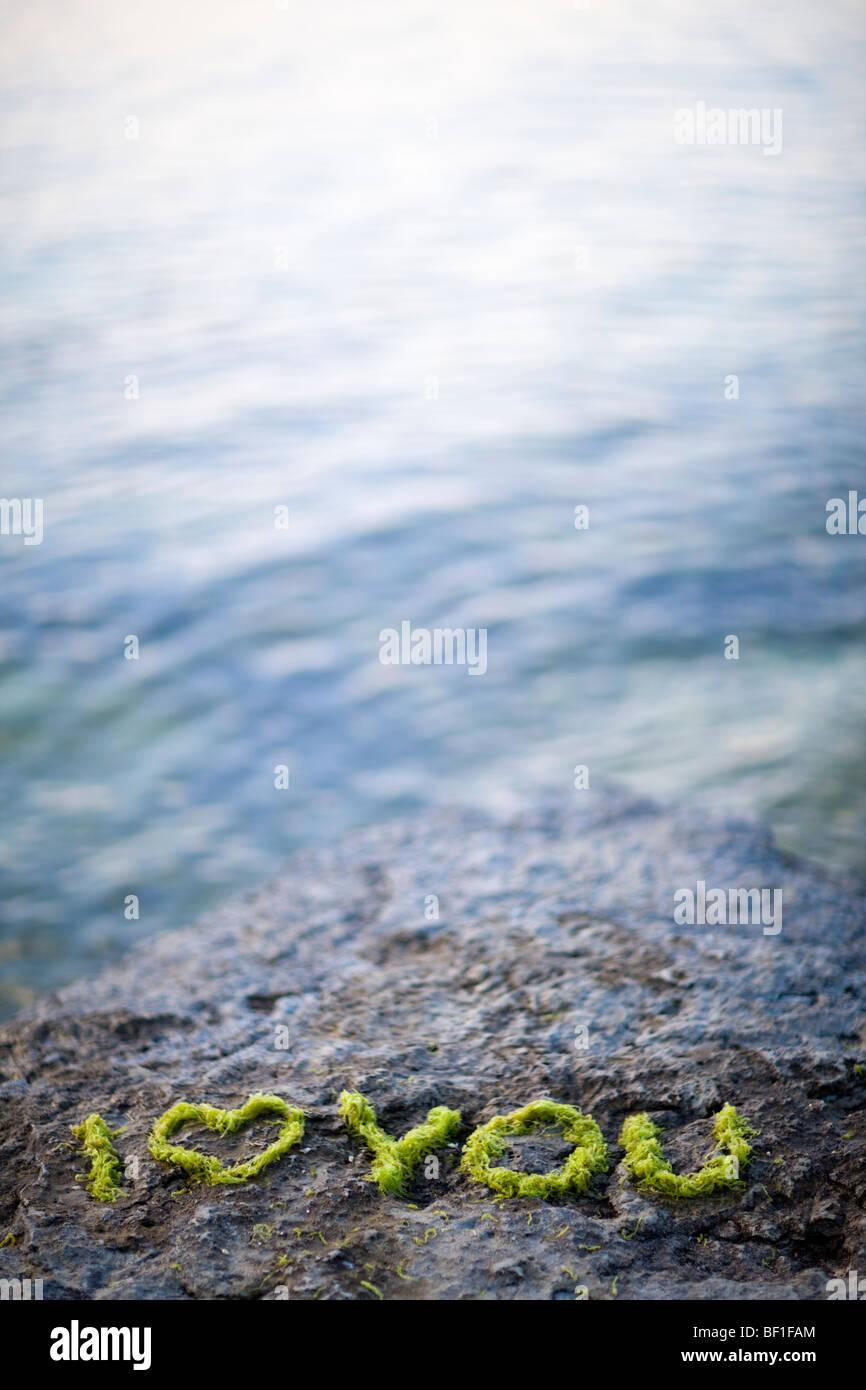 Text mit Seegras auf einem Felsen am Meer, Schweden. Stockbild