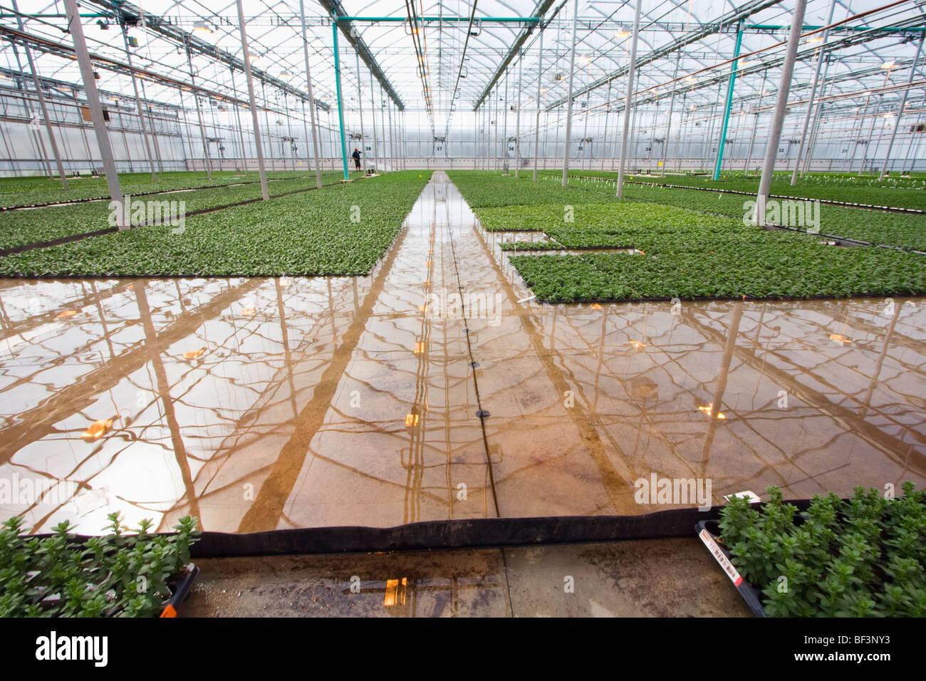 Flut boden bew sserung von wohnungen der fr hen wachstum for Design von zierpflanzen