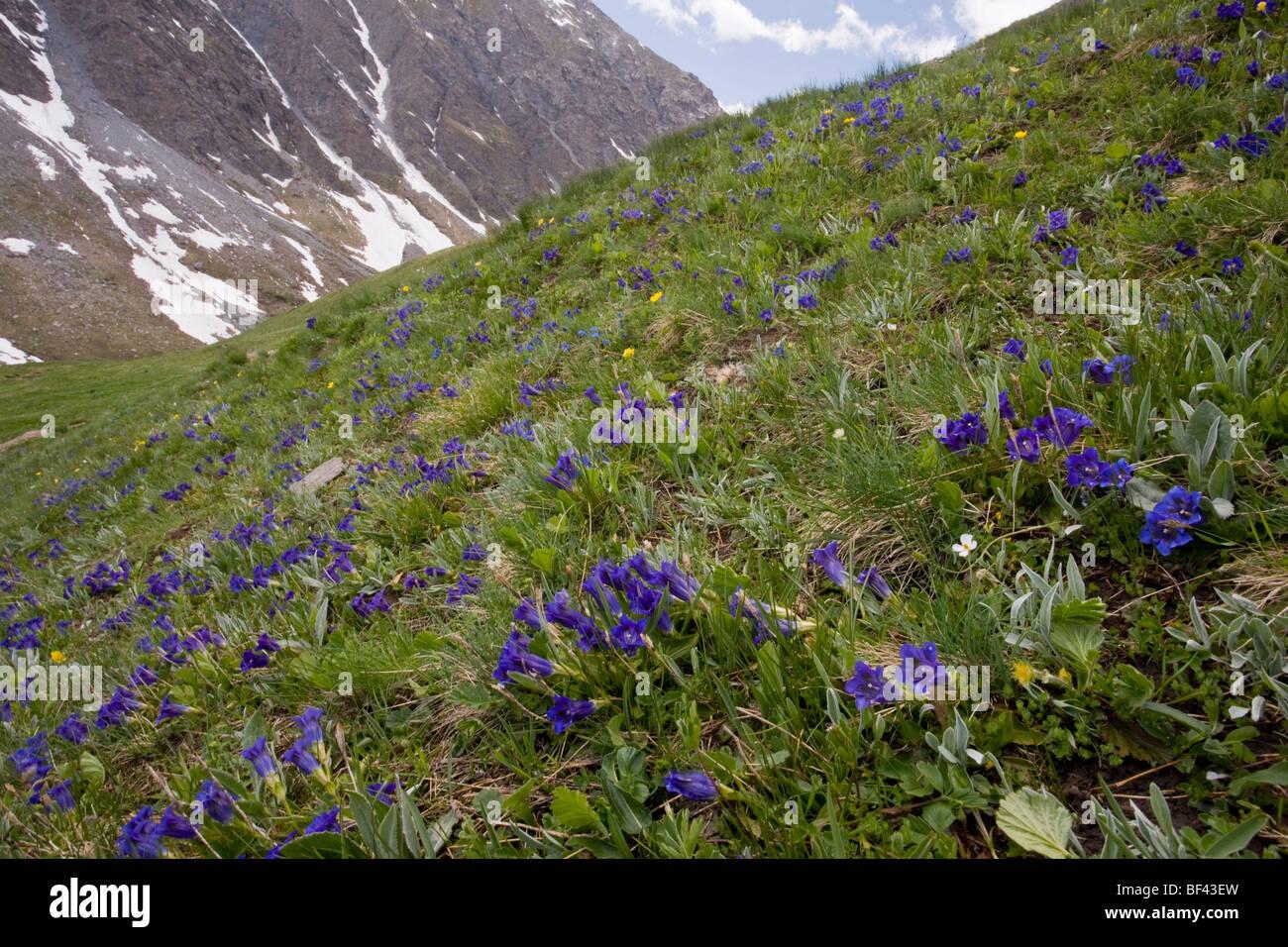 Klettersteig Queyras : Queyras stockfotos bilder alamy