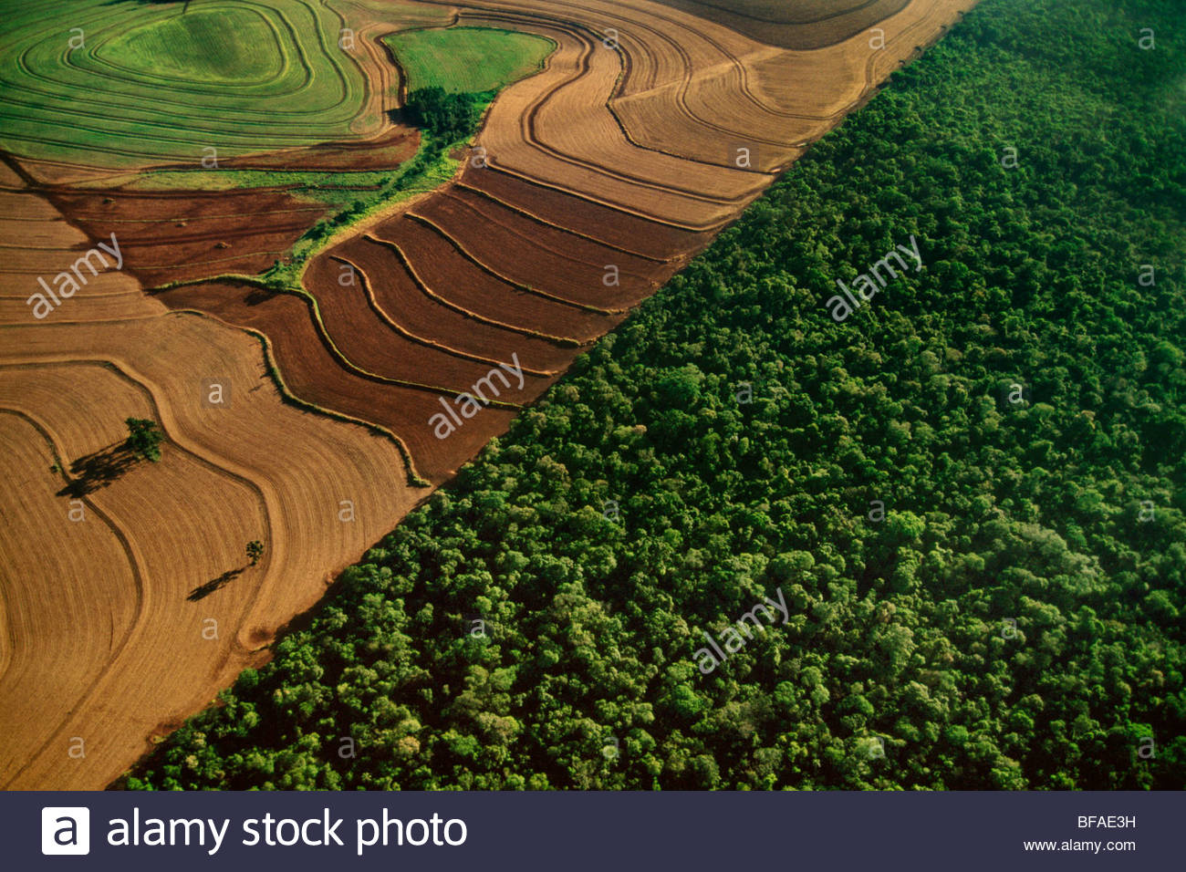 Ackerland grenzt an Lebensraum Regenwald (Antenne), Nationalpark Iguaçu, Brasilien Stockbild