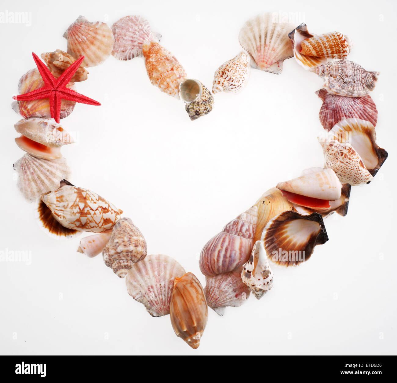 Muscheln in einer Form des Valentins Herzen auf weißem Stockbild