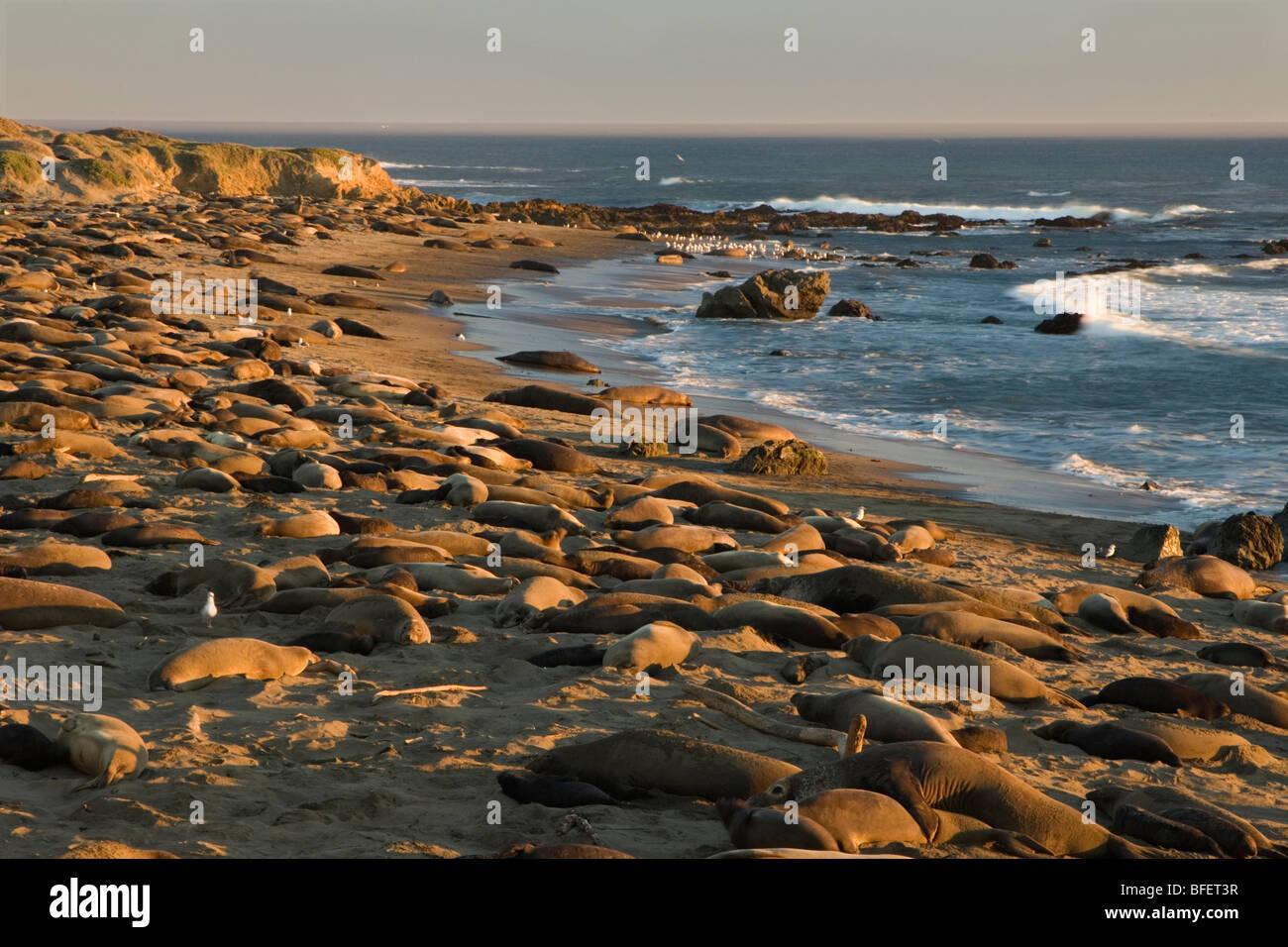 Piedras Stockfotos & Piedras Bilder