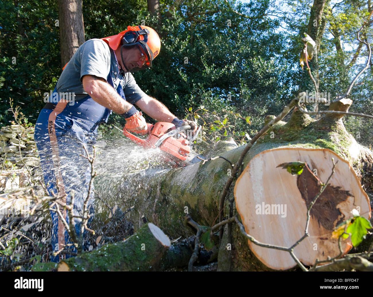 Kletterausrüstung Zum Bäume Fällen : Kletterausrüstung baum fällen und pflege b m wübben