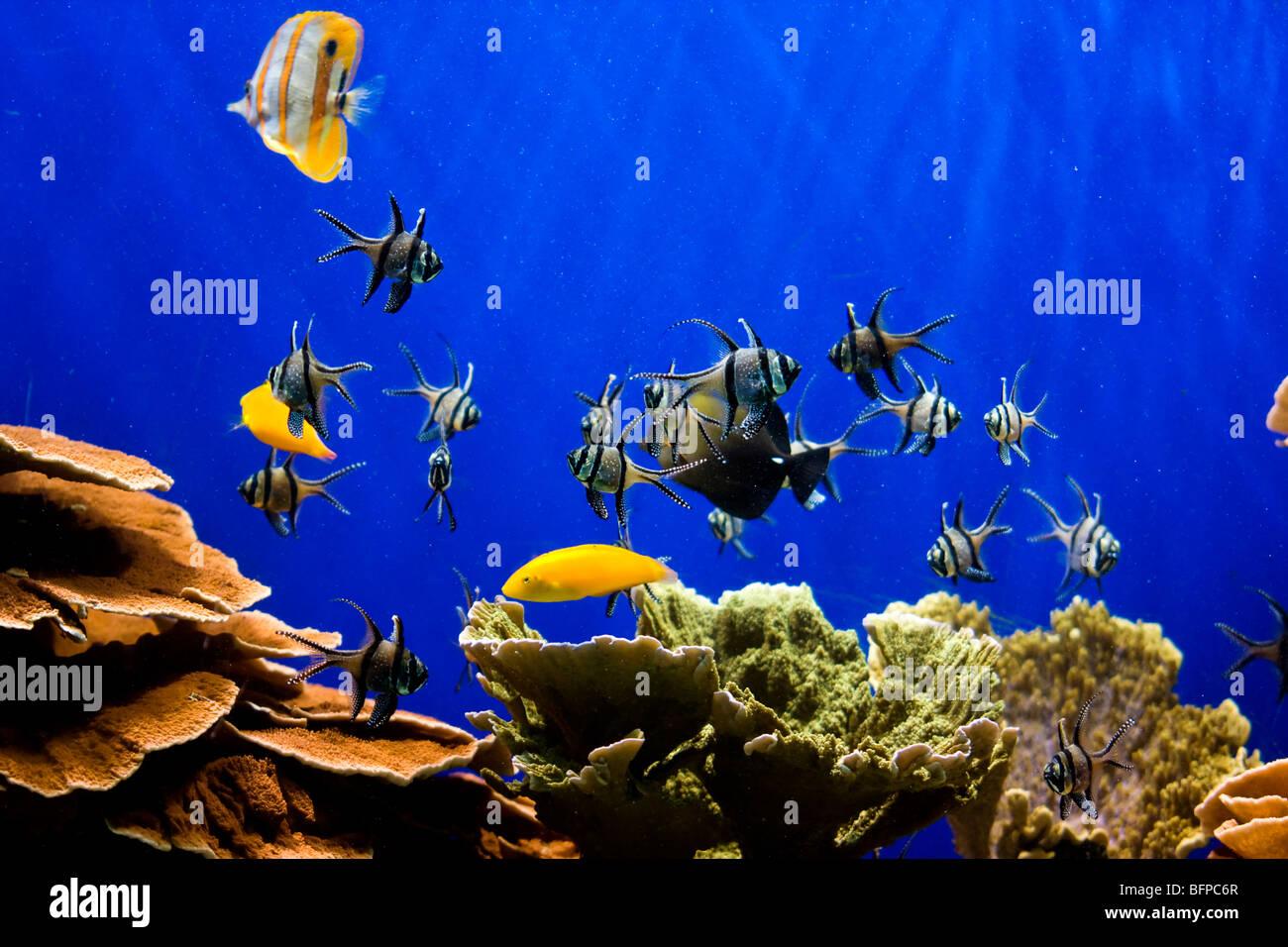 Fein Tropische Fische Zum Ausdrucken Bilder ...