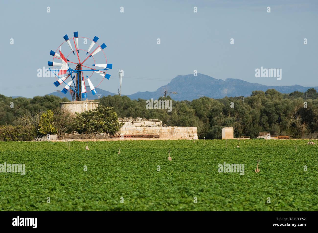 Bewässerung-Windmühle auf einem Bauernhof in Mallorca, Mallorca, Spanien Stockbild