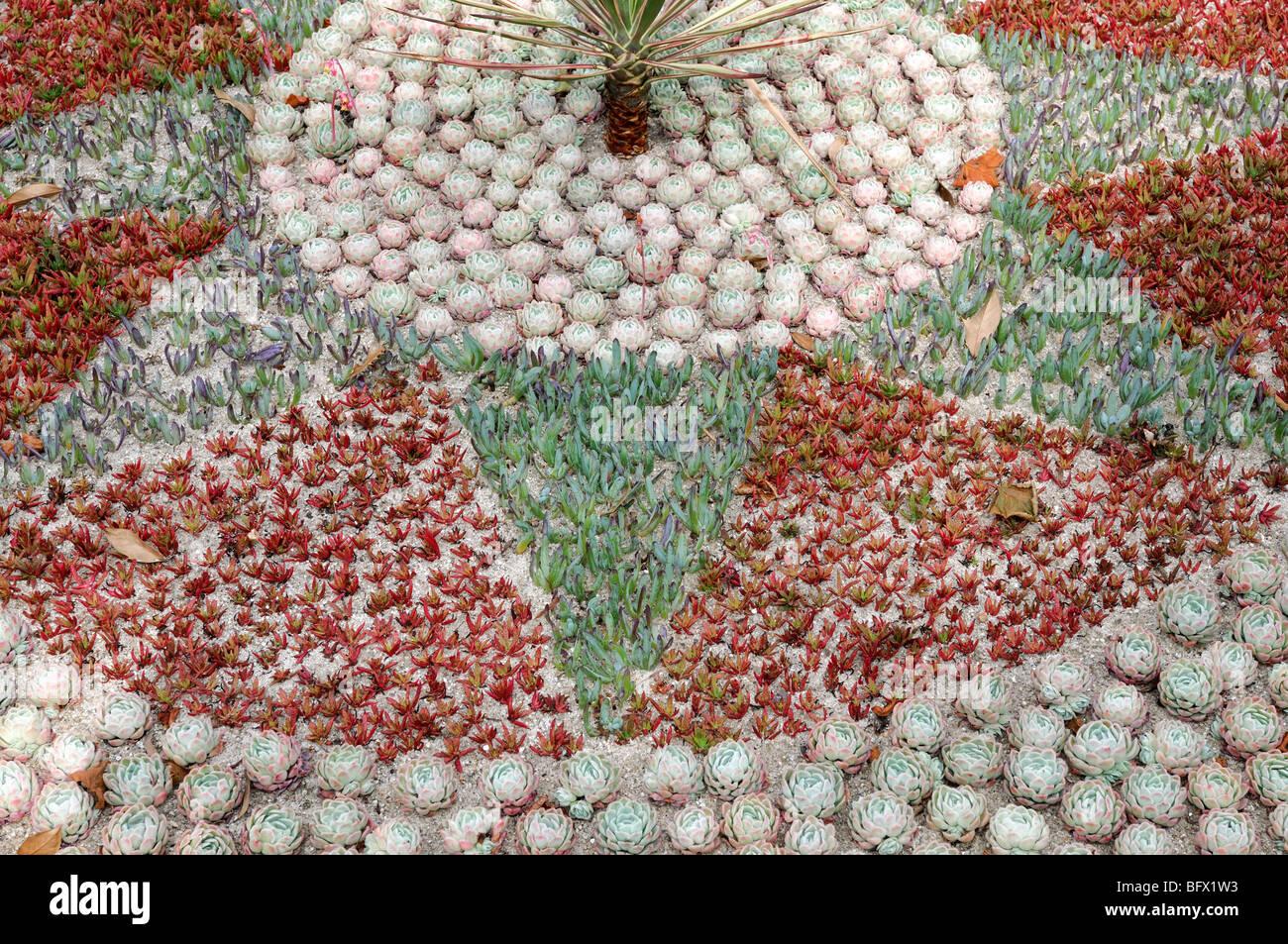 Anzeige Von Saftigen Dürre Tolerant Pflanzen In Ein Geometrisches Design  Gartenarchitektur Gartenbau Xeriscaping