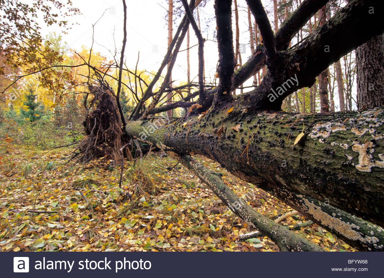 Baum-Pilz Stockbild