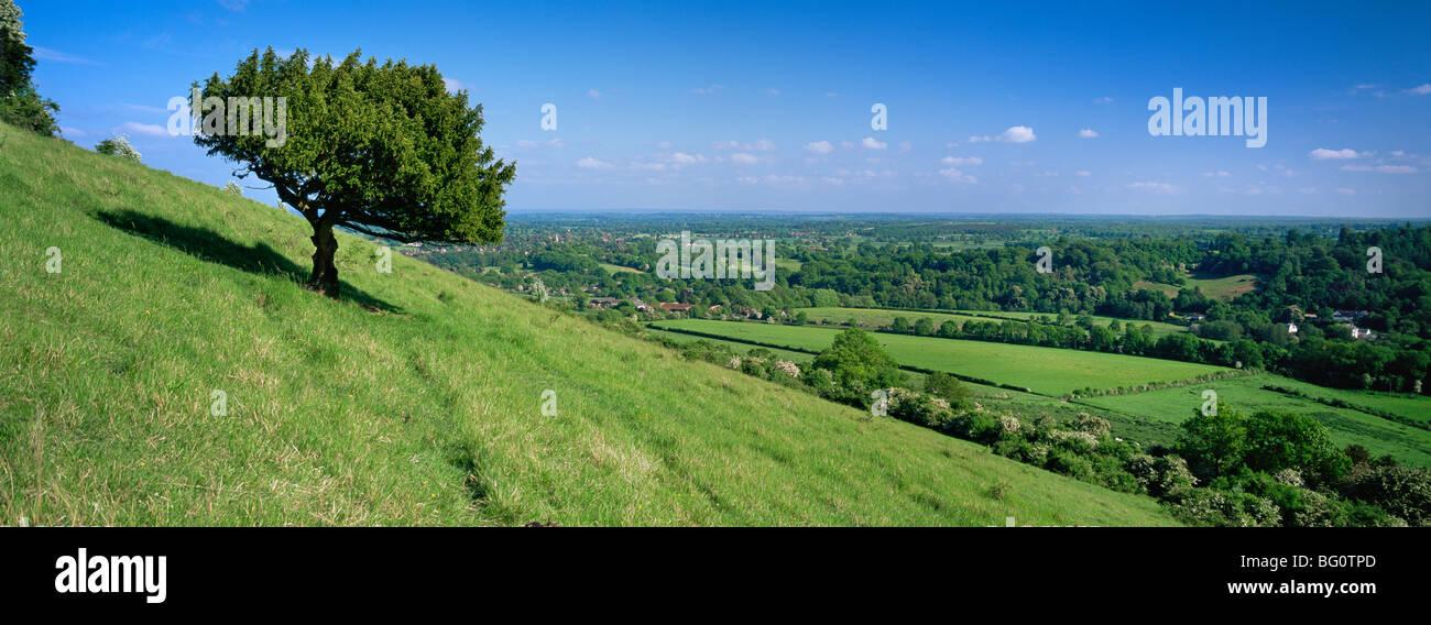 Sommer-Ansicht Süd mit Buchsbaum aus Box Hill, North Downs, Surrey Hills, Surrey, England, Vereinigtes Königreich, Stockbild