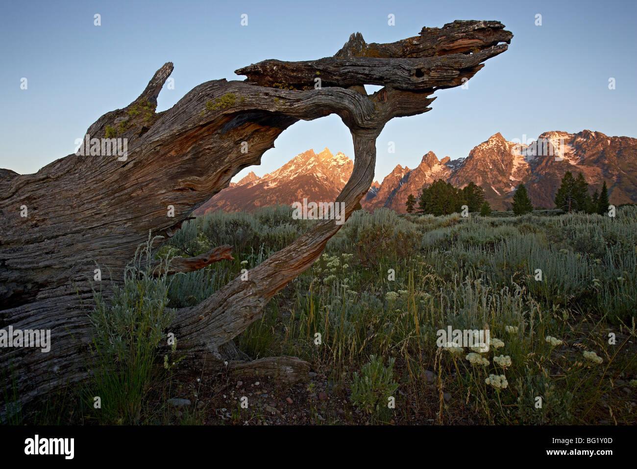 Teton im ersten Licht, Grand-Teton-Nationalpark, Wyoming, Vereinigte Staaten von Amerika, Nordamerika Stockbild