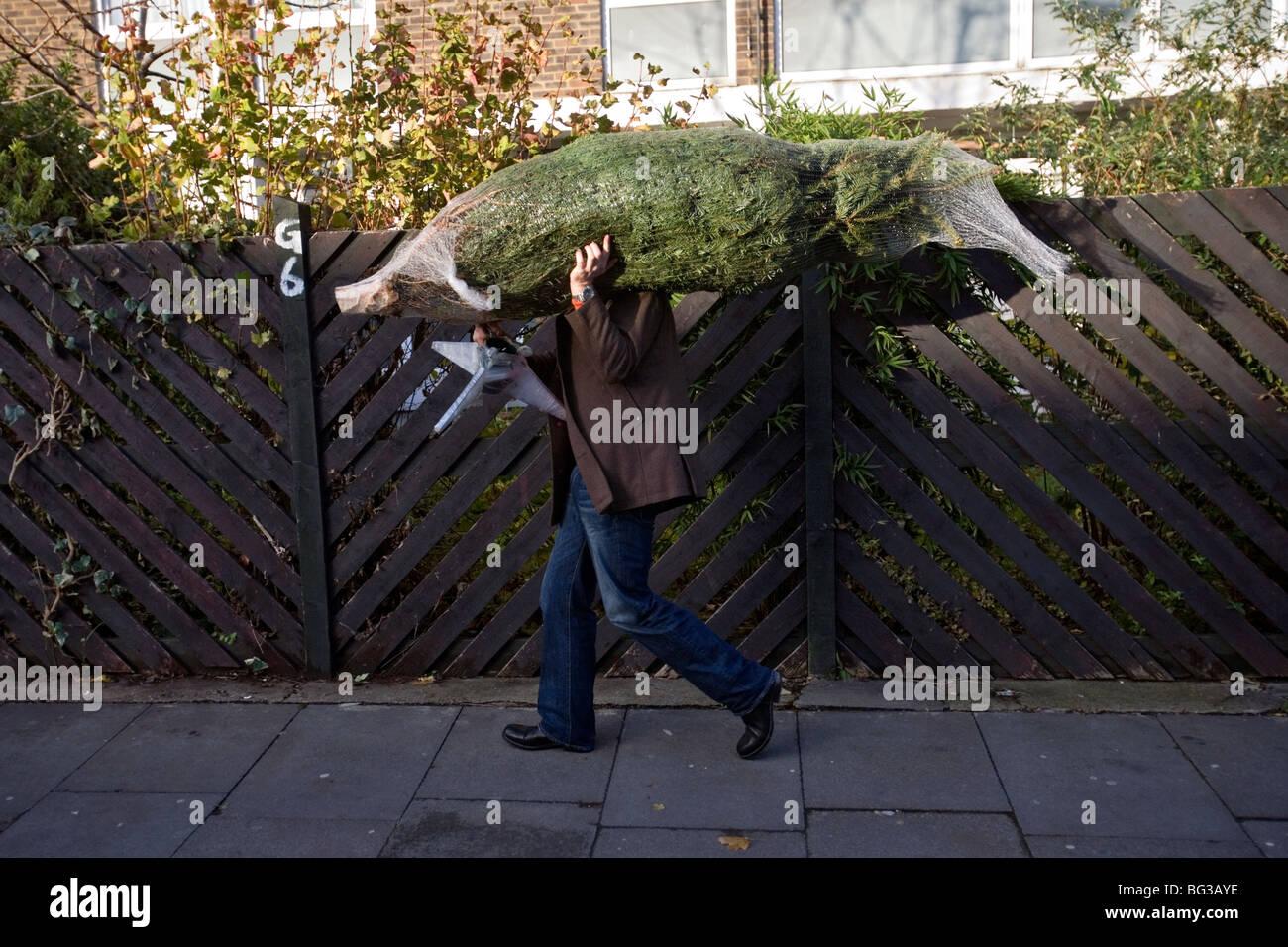ein Mann, der einen Weihnachtsbaum an Columbia Road Flower Market in London gekauft hat Stockfoto