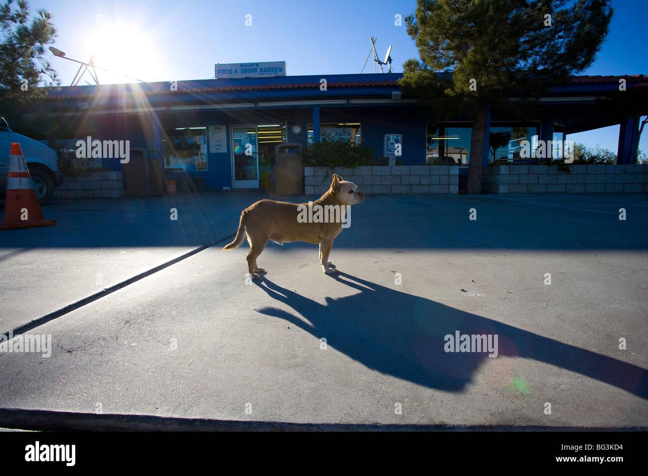 Wüste Tankstelle Hund Stockbild