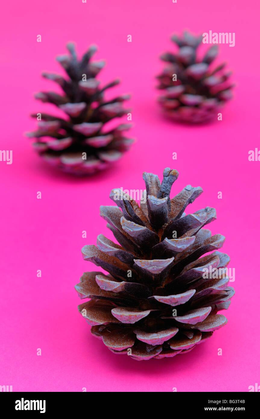 Tannenzapfen, die wie Weihnachtsbäume auf hell rosa Hintergrund Stockbild