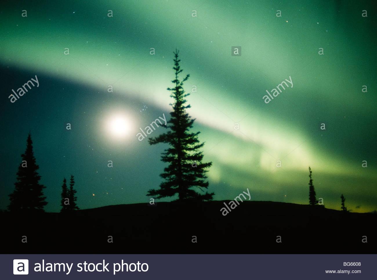 Alaska. Nordlicht, Aurora Borealis im grünen Vorhängen in einem dunklen Himmel geteilt durch den Mond Stockbild