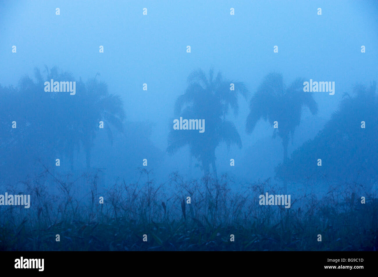 Landschaft mit Palmen und Nebel, PANTANAL, MATO GROSSO, Landschaft mit Palmen und Nebel, PANTANAL, MATO GROSSO, Stockbild