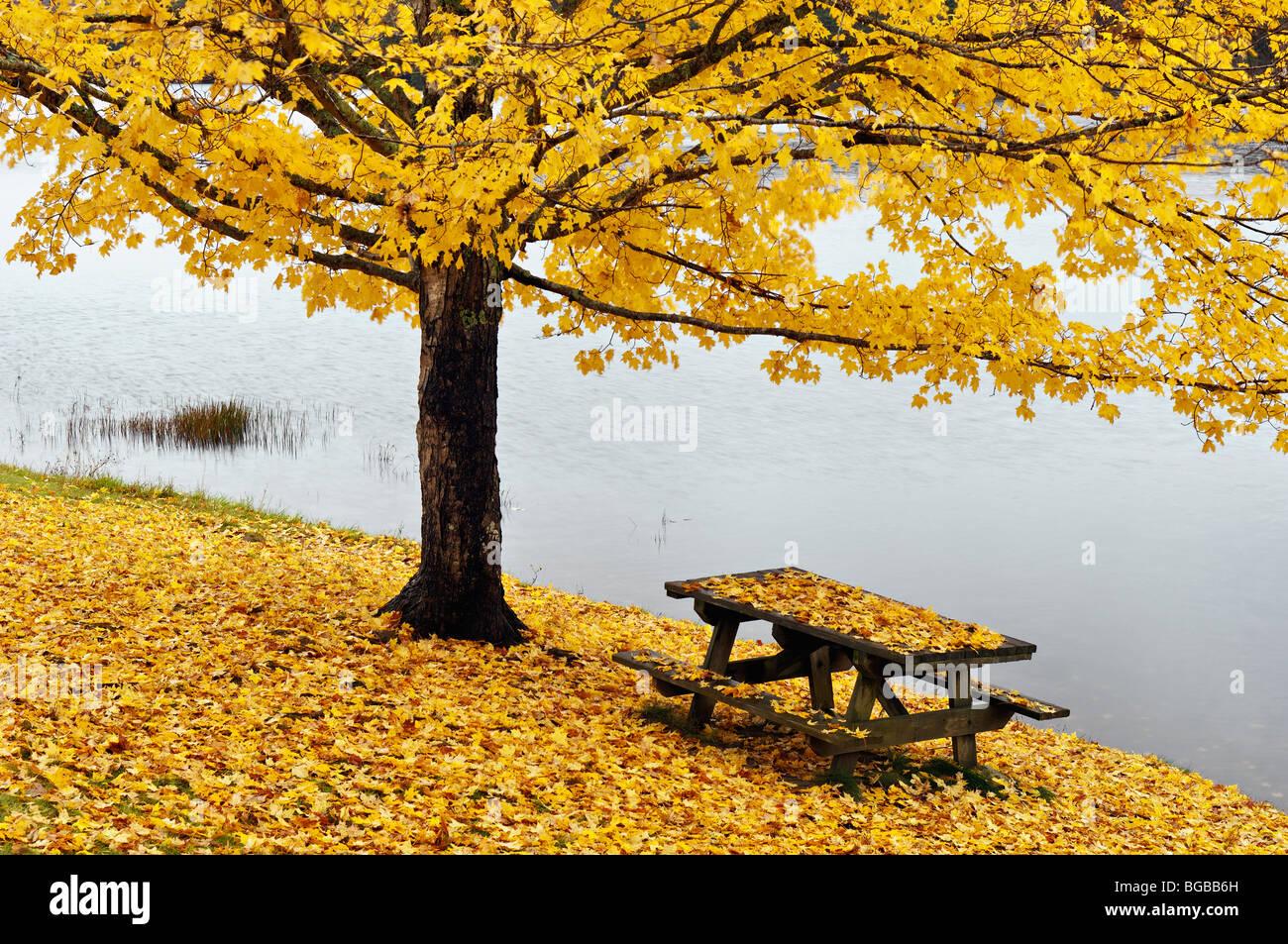 Ahornbaum und Picknick-Tisch, bedeckt mit Laub im Herbst am See im Herbst Creek Falls State Park in Tennessee Stockfoto