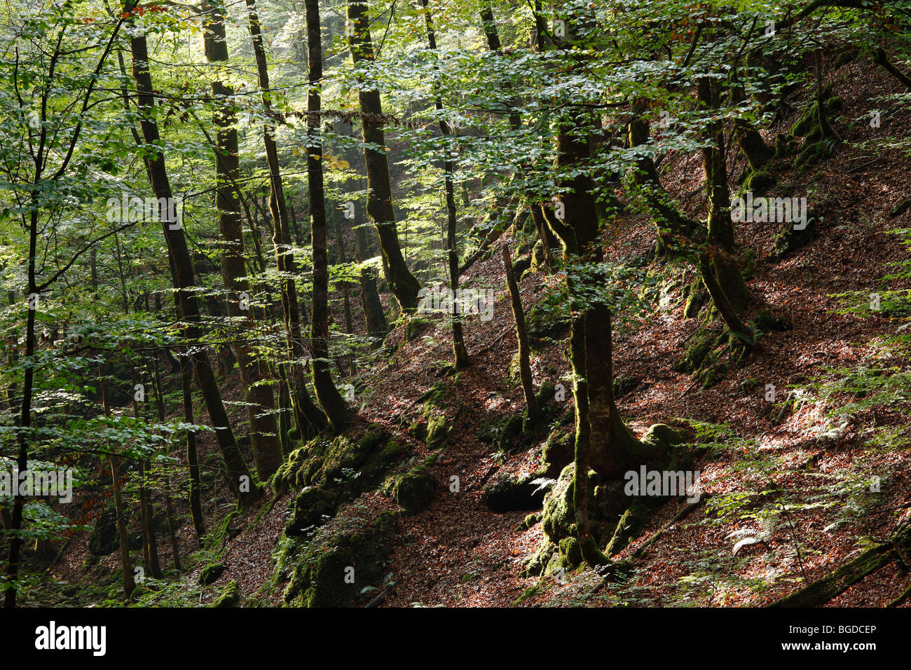 Montane Wald, Nationalpark Risnjak, Gorski Kotar, Kroatien, Europa Stockbild