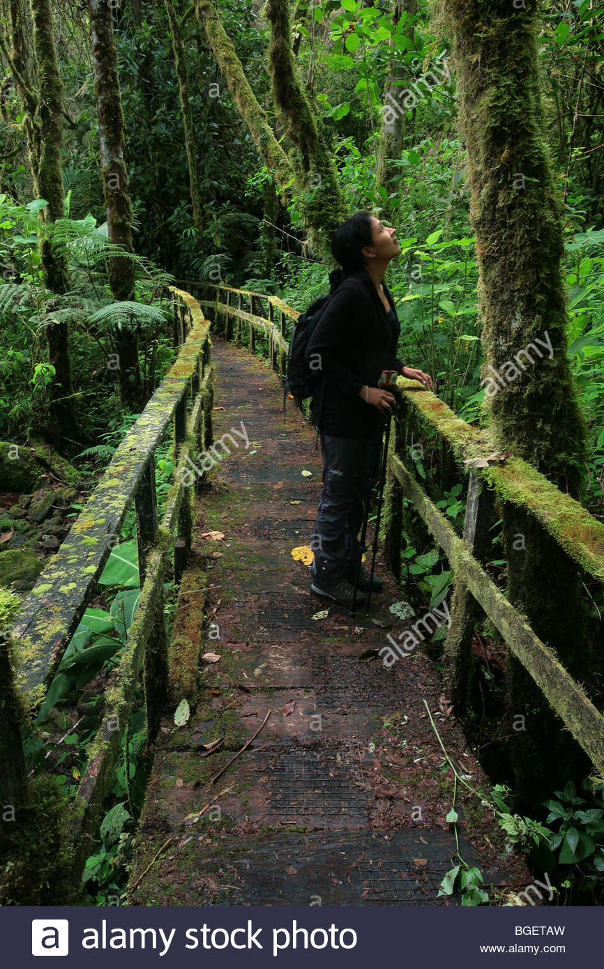 Natur Tourist in den Nebelwald ofLa Amistad Nationalpark in der Provinz Chiriqui, Republik Panama Stockbild