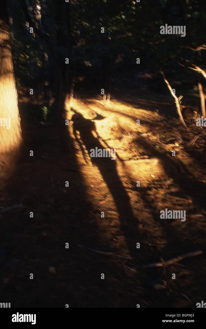 eine Person, die Schatten im Forrest Stock, bedrohlich, geheimnisvoll Stockbild