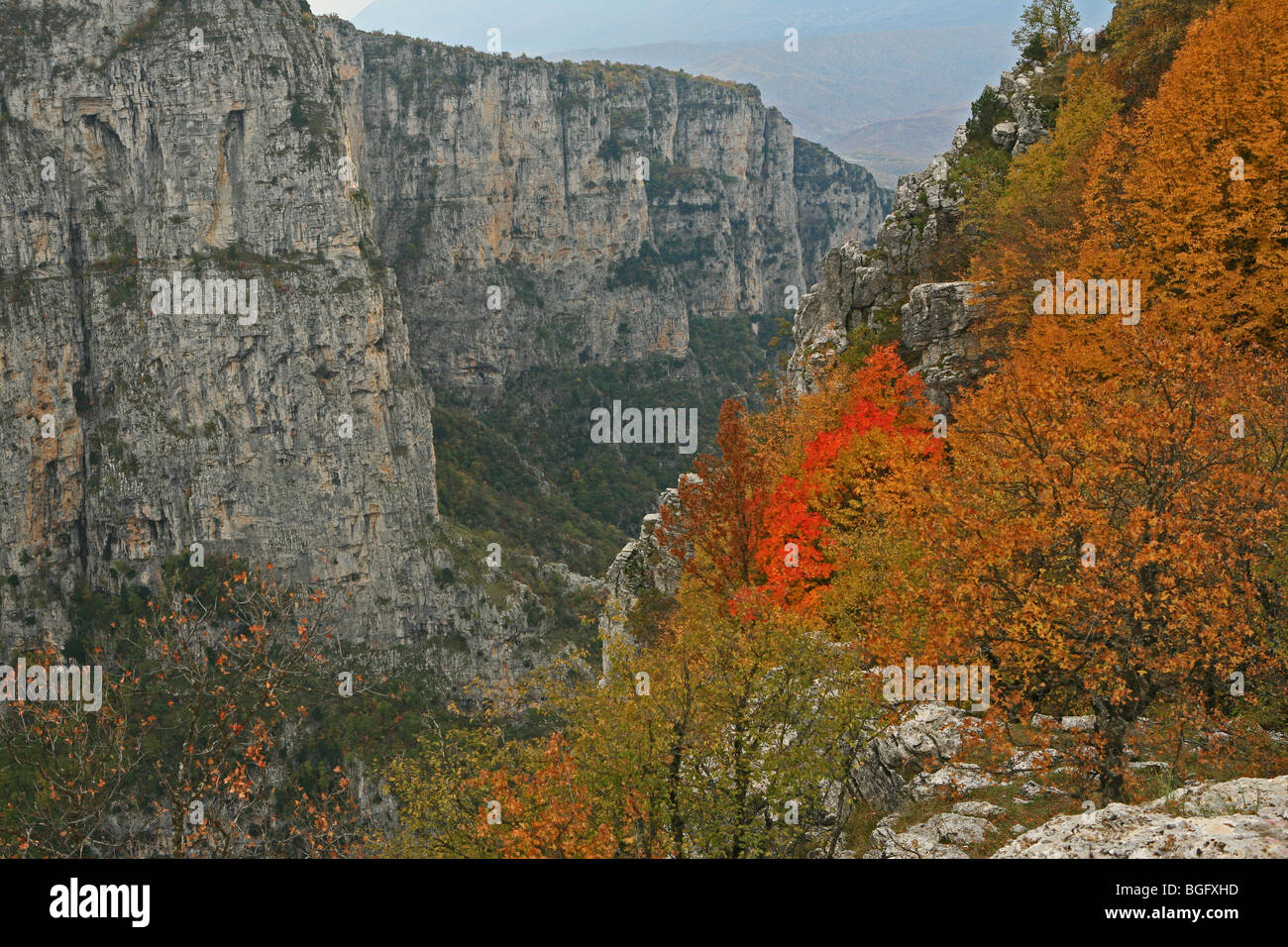 griechischen b ume im herbst in die vikos schlucht pindos gebirge zagoria griechenland stockfoto. Black Bedroom Furniture Sets. Home Design Ideas