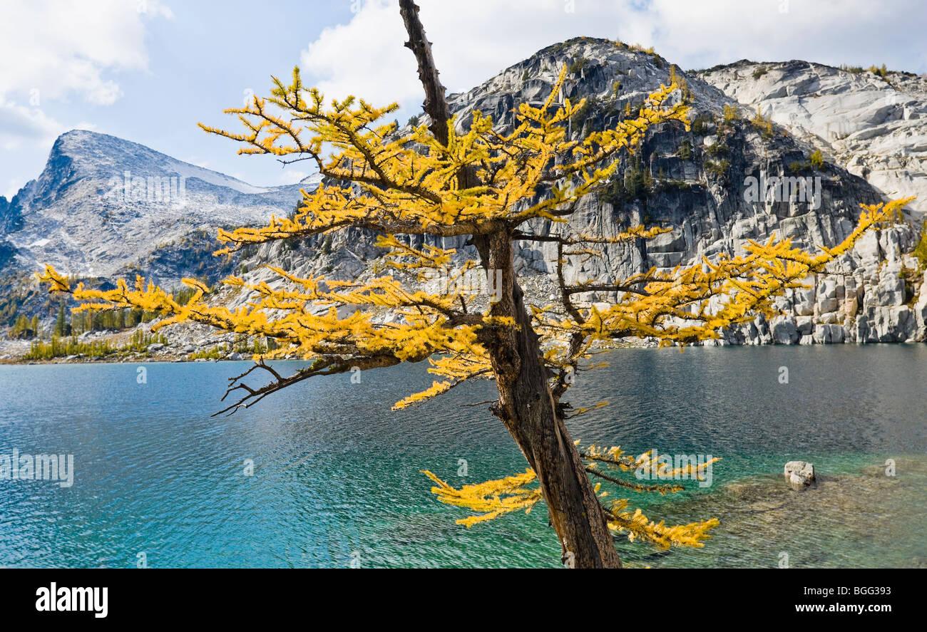 Eine Lärche Baum im Herbst neben Perfektion See mit wenig Annapurna in der Ferne, Verzauberung Lakes Wilderness Stockbild